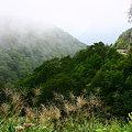 写真: 霧の白山スーパー林道