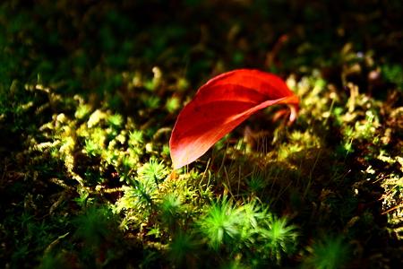 落ち葉(1)  光と陰