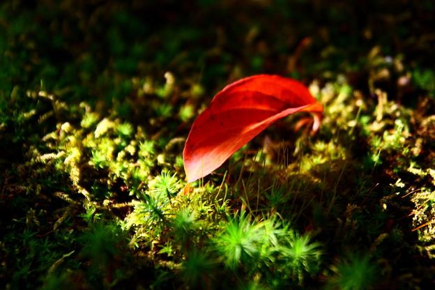 写真: 落ち葉(1)  光と陰