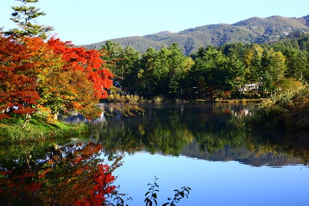 蓼科湖 紅葉