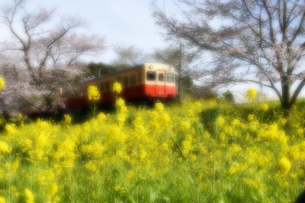 写真: 春ウララ