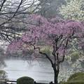 写真: 雨の新宿御苑 (2)