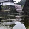 写真: 桜田門に咲く