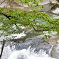 写真: 初夏の渓流