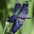 写真: 蝶とんぼ (2)
