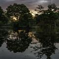 写真: 黎明「駒出池」