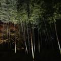Photos: 夜の竹林