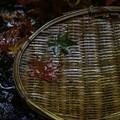 写真: 本土寺にて