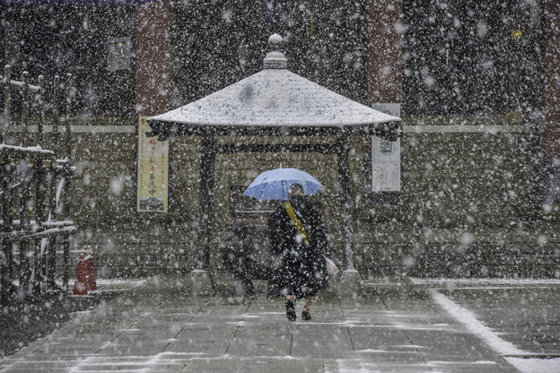 雪の本門寺 (1)