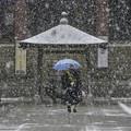 写真: 雪の本門寺 (1)