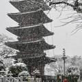 写真: 雪の本門寺 (2)
