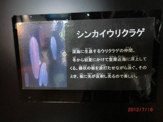 室蘭水族館(2012.7).15