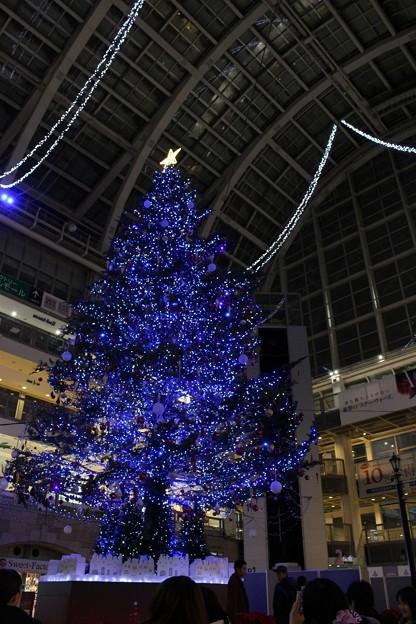 サッポロファクトリー アトリウム 「ジャンボクリスマスツリー」 (3)