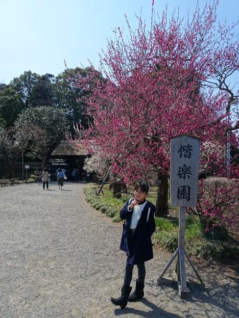 日本三名園(1) 偕楽園