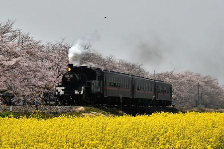 桜となの花とSLもおか