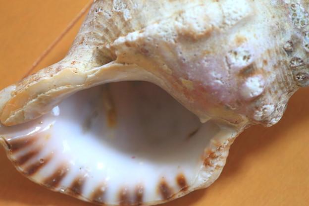 Photos: 貝殻