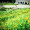 Photos: 春の川