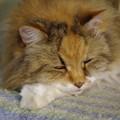 写真: 寝てるのよ(w)
