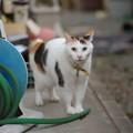 写真: 今では裏庭生活