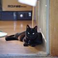 写真: 或るお店の猫さん