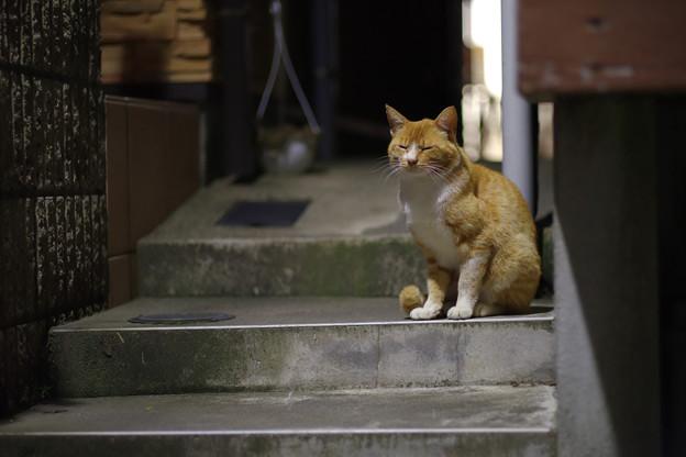こんな猫さんや