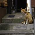 写真: こんな猫さんや