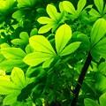 新緑の匂い