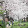 写真: 春の中で