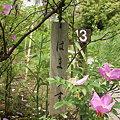 Photos: 浜梨(ハマナス)