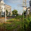 Photos: 新金線