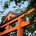 写真: 新宿日枝神社 山王鳥居