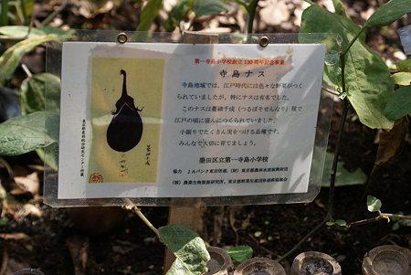 寺島茄子(テラシマナス)