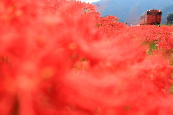 紅ジャングル