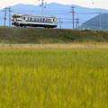 写真: ぼたん山とキハ