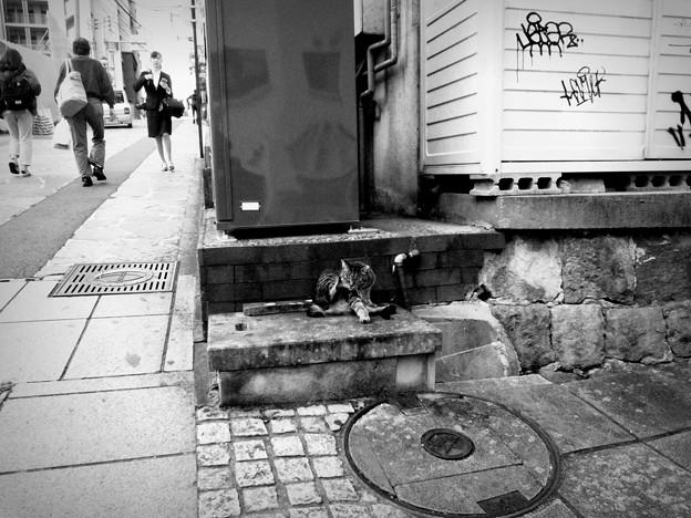 街猫873