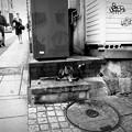 写真: 街猫873