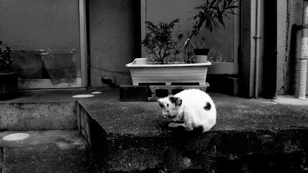 写真: 街猫874