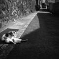写真: 街猫877