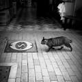写真: 街猫883
