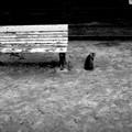 街猫888