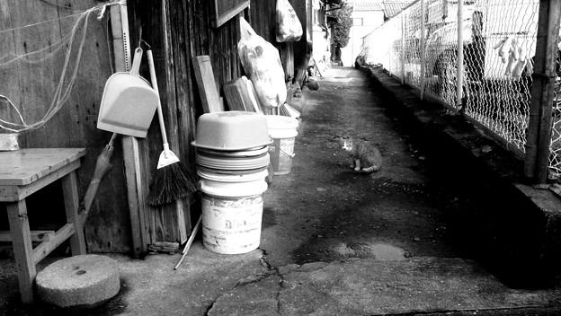 街猫898