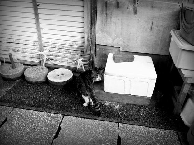 街猫899