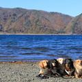 写真: 秋の本栖湖をバックに