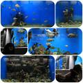 写真: 水族館2