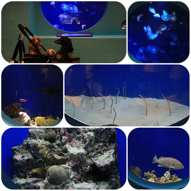 写真: 水族館6