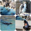 写真: ペンギン島