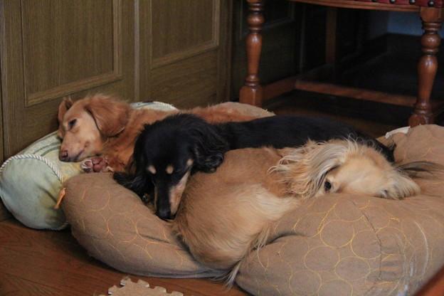 写真: 1つのクッションで寝んね