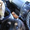 写真: ドライブ出発