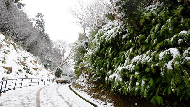 雪清水の道