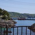 写真: DSC02251 伊豆下田 下田海中水族館